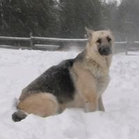 hope_blizzard