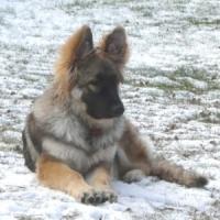 keira_snow_web