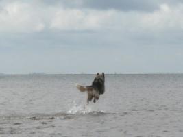 zeus_leaping1